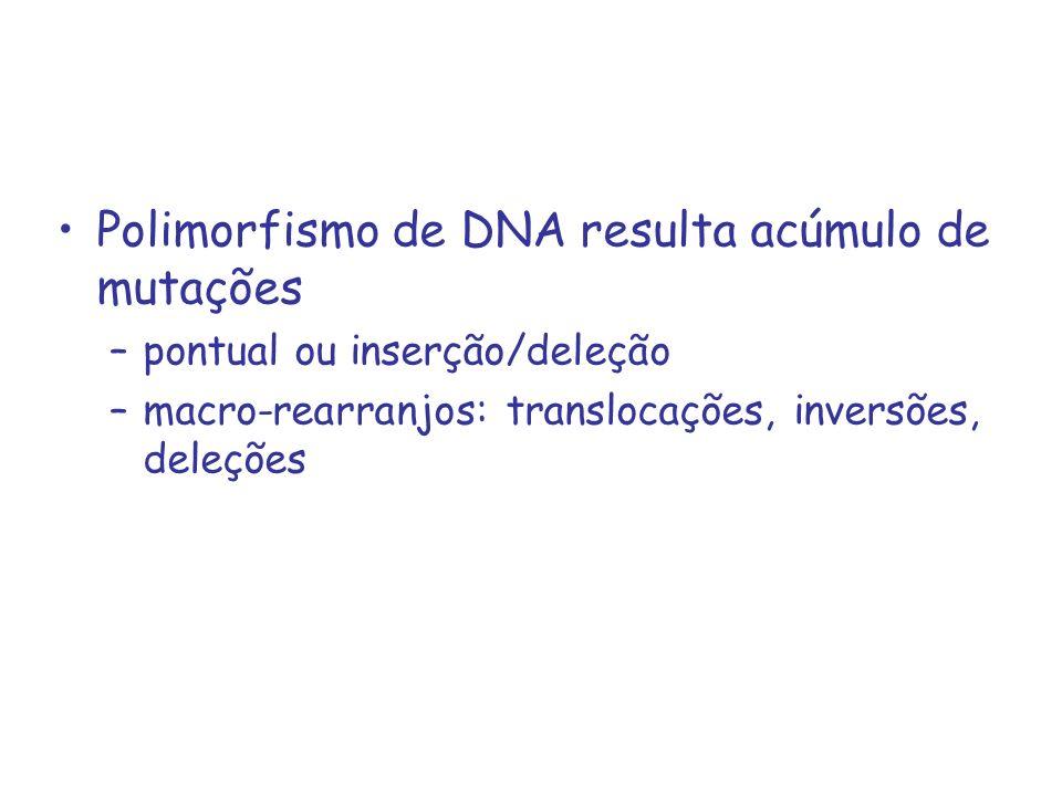1.Mutações pontuais - SNPs A.ATCTCGTGATTCCTAGTCGTA TAGAGCACTAAGGGATCAGCAT ex.