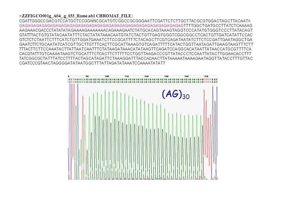 >ZZFIGCO001g_A04_.g_033_Rome.ab1 CHROMAT_FILE: CGATTGGGCCGACGTCCATGCTCCGGNNCGCATGTCGGCCGCGGGAATTCGATTCTCTTGCTTACGCGTGGACTAGCTTACAATA GAGAGAGAGAGAGAGAG