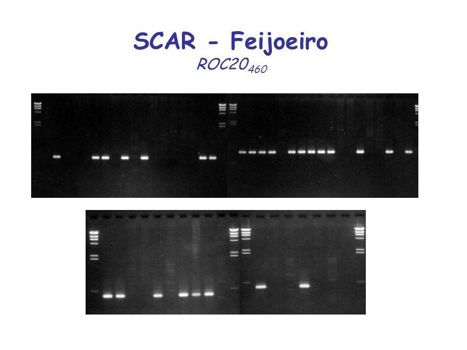 SCAR - Feijoeiro ROC20 460