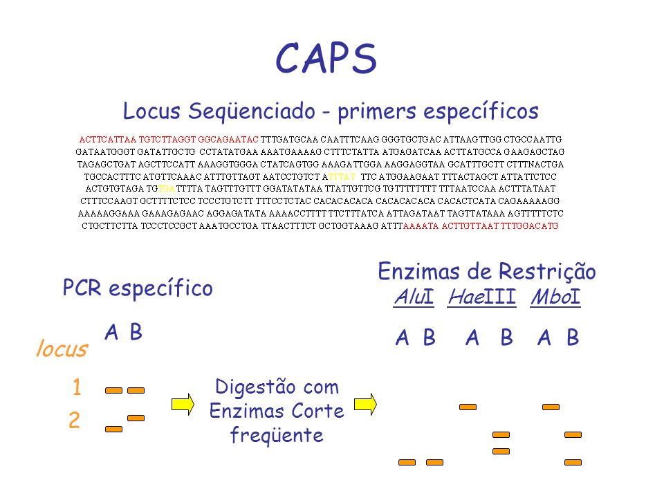 CAPS AB Locus Seqüenciado - primers específicos AB PCR específico Digestão com Enzimas Corte freqüente ABAB 1 2 locus Enzimas de Restrição AluI HaeIII
