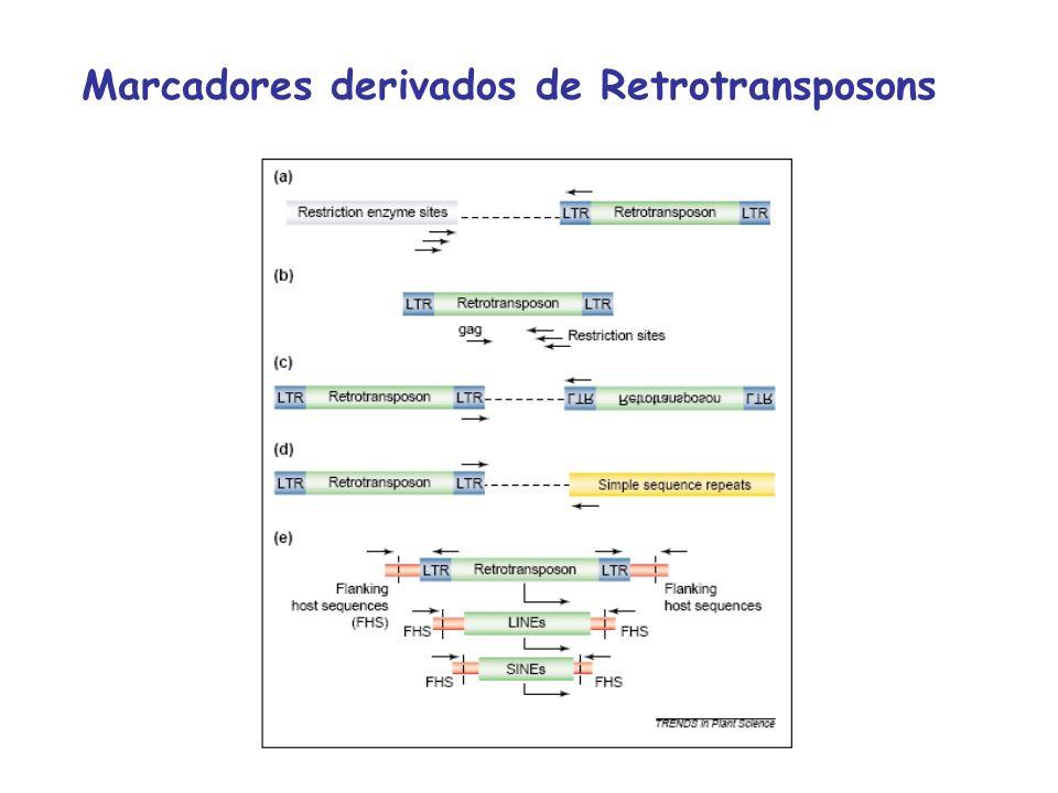 Marcadores derivados de Retrotransposons