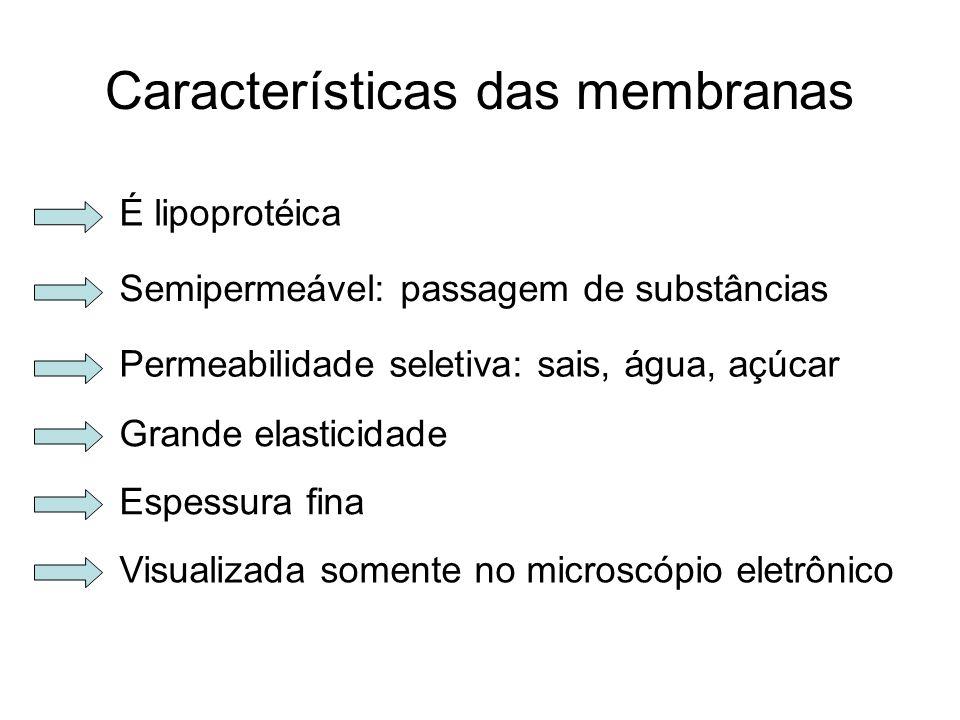 Características das membranas É lipoprotéica Semipermeável: passagem de substâncias Permeabilidade seletiva: sais, água, açúcar Grande elasticidade Es
