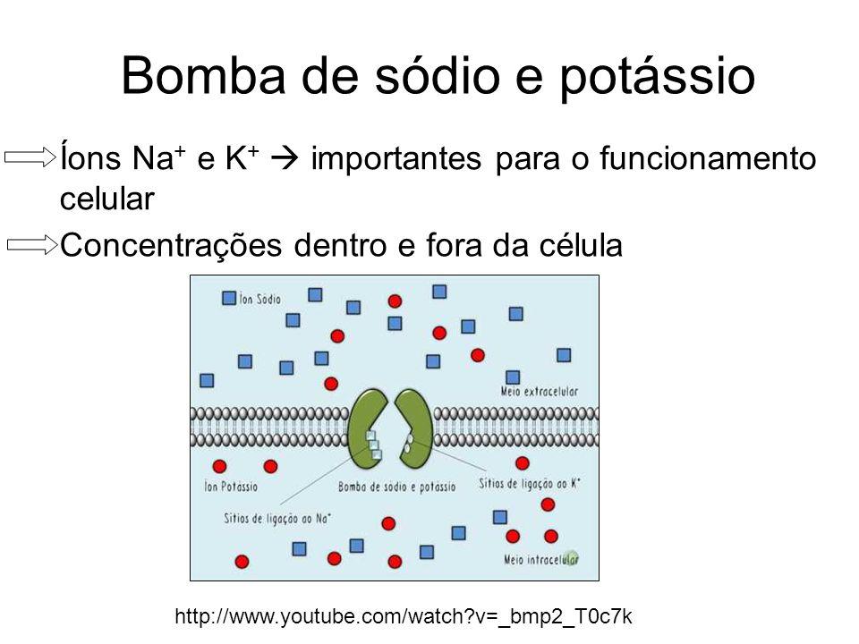 Bomba de sódio e potássio Íons Na + e K + importantes para o funcionamento celular Concentrações dentro e fora da célula http://www.youtube.com/watch?