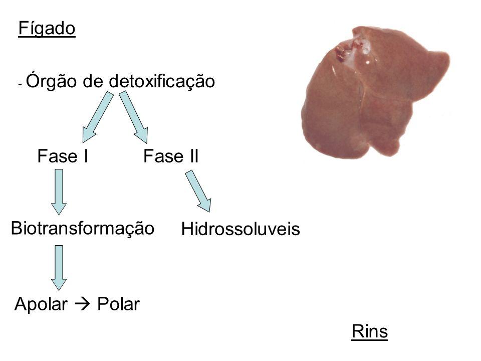 Fígado - Órgão de detoxificação Fase IFase II Biotransformação Apolar Polar Hidrossoluveis Rins
