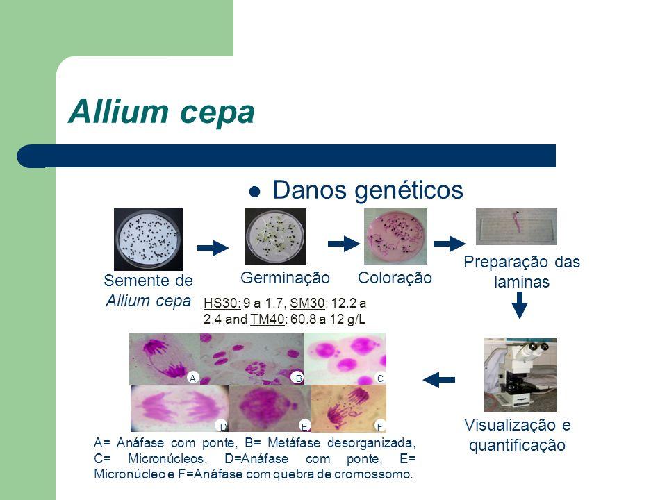 Allium cepa Danos genéticos Germinação HS30: 9 a 1.7, SM30: 12.2 a 2.4 and TM40: 60.8 a 12 g/L Coloração Preparação das laminas Visualização e quantif