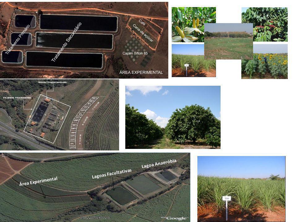 as emissões de N 2 O e CO 2 dependem: umidade do solo temperatura quantidades de fertilizantes nitrogenado o CH 4, dentre os três principais gases de efeito estufa, foi o único que não apresentou relação direta com a sazonalidade climática; a irrigação com EET mostra ser uma prática sustentável CONCLUSÕES