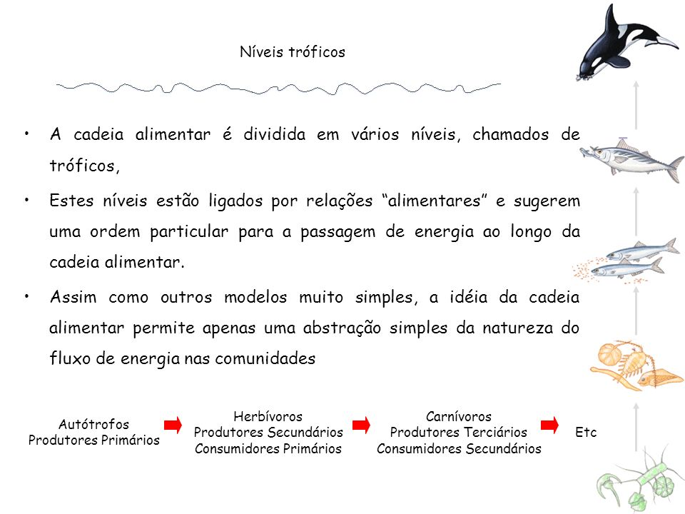 Níveis tróficos Autótrofos Produtores Primários Herbívoros Produtores Secundários Consumidores Primários Carnívoros Produtores Terciários Consumidores