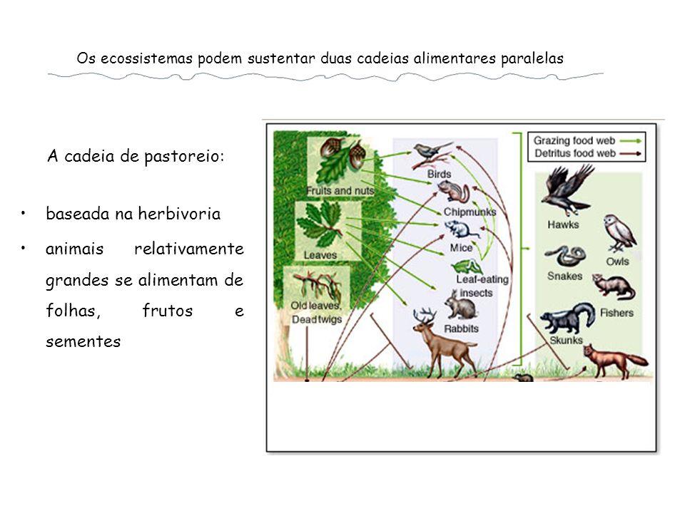 Os ecossistemas podem sustentar duas cadeias alimentares paralelas baseada na herbivoria animais relativamente grandes se alimentam de folhas, frutos