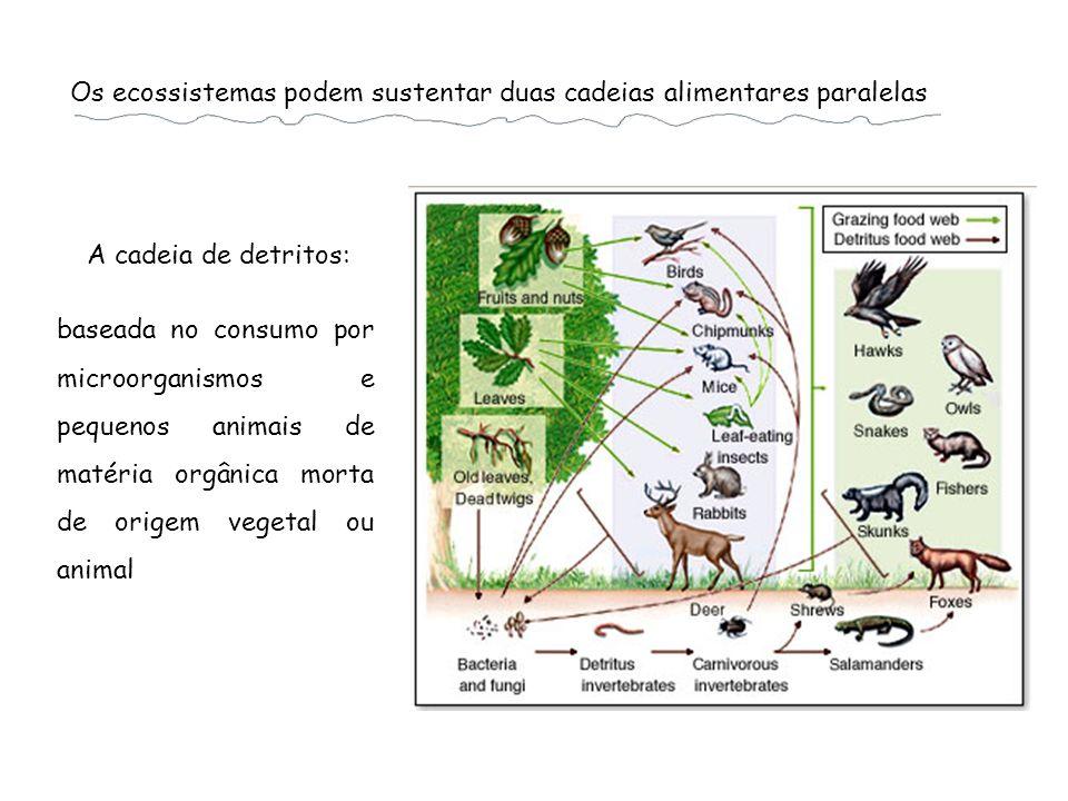 Os ecossistemas podem sustentar duas cadeias alimentares paralelas baseada no consumo por microorganismos e pequenos animais de matéria orgânica morta