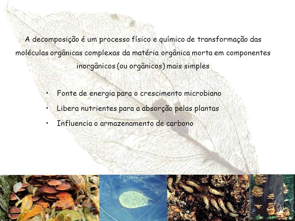 A decomposição é um processo físico e químico de transformação das moléculas orgânicas complexas da matéria orgânica morta em componentes inorgânicos