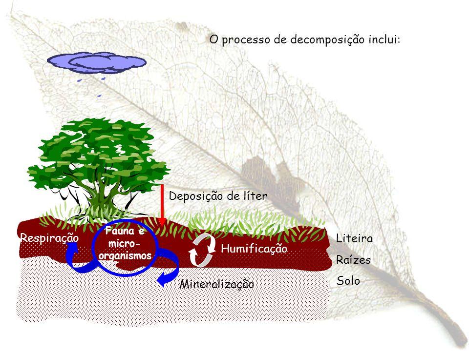 O processo de decomposição inclui: Fauna e micro- organismos Mineralização Respiração Deposição de líter Liteira Raízes Solo Humificação