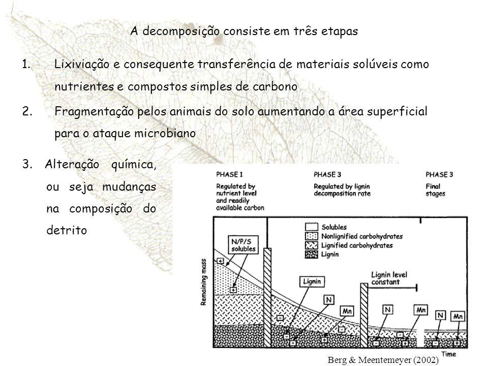 A decomposição consiste em três etapas 1.Lixiviação e consequente transferência de materiais solúveis como nutrientes e compostos simples de carbono 2