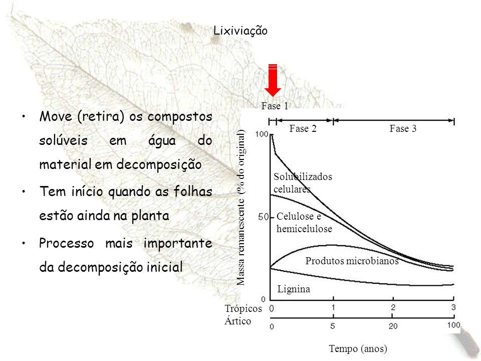 Lixiviação Move (retira) os compostos solúveis em água do material em decomposição Tem início quando as folhas estão ainda na planta Processo mais imp