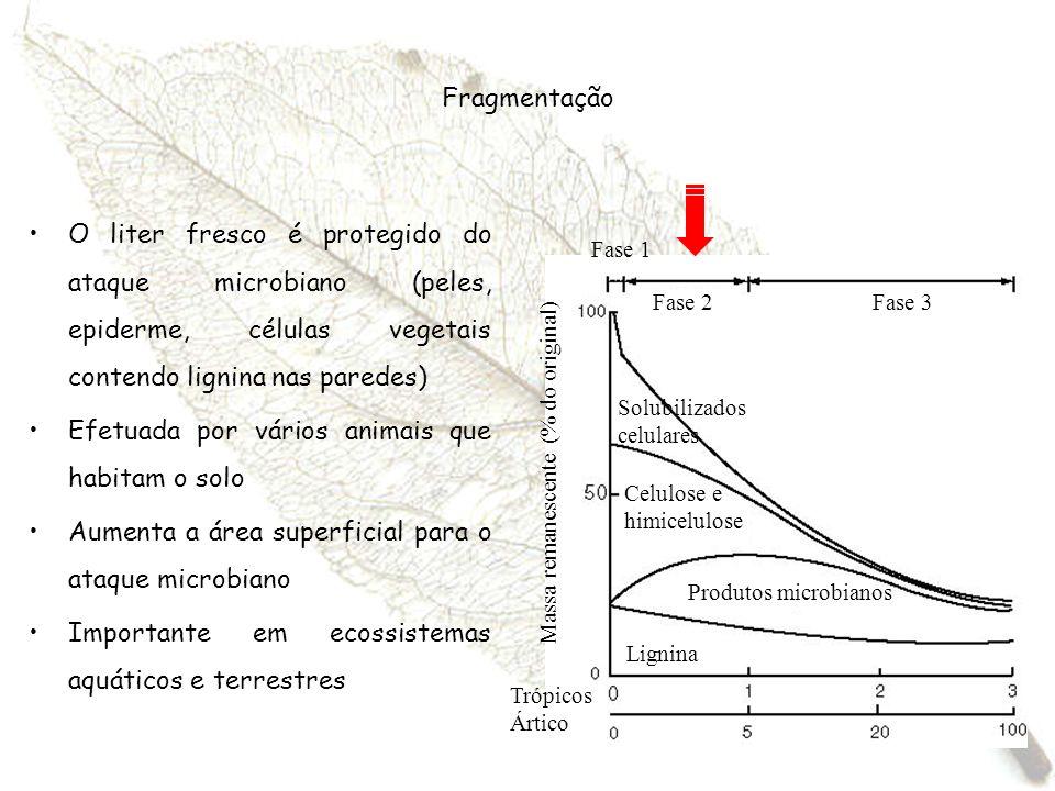 Fragmentação O liter fresco é protegido do ataque microbiano (peles, epiderme, células vegetais contendo lignina nas paredes) Efetuada por vários anim