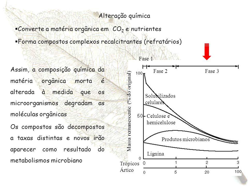 Alteração química Converte a matéria orgânica em CO 2 e nutrientes Forma compostos complexos recalcitrantes (refratários) Fase 1 Fase 2Fase 3 Lignina