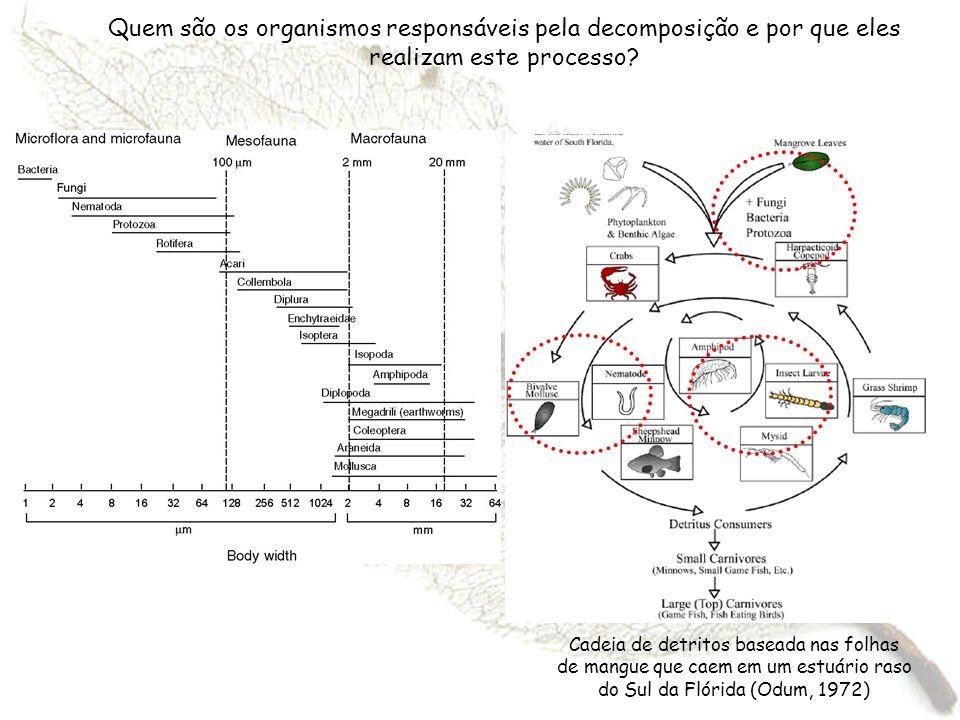 Quem são os organismos responsáveis pela decomposição e por que eles realizam este processo? Cadeia de detritos baseada nas folhas de mangue que caem