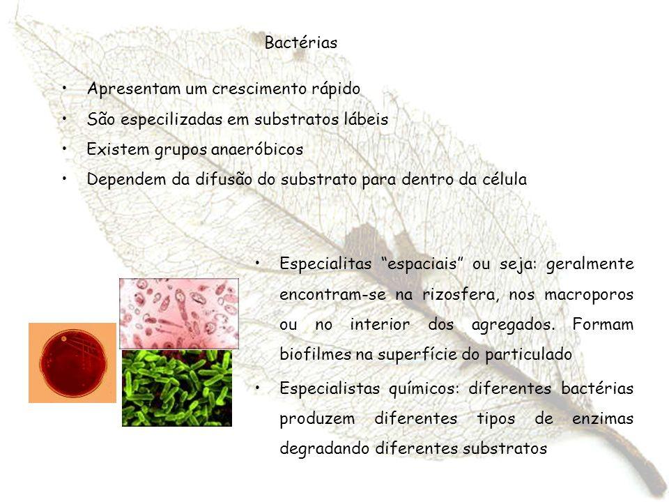 Bactérias Apresentam um crescimento rápido São especilizadas em substratos lábeis Existem grupos anaeróbicos Dependem da difusão do substrato para den