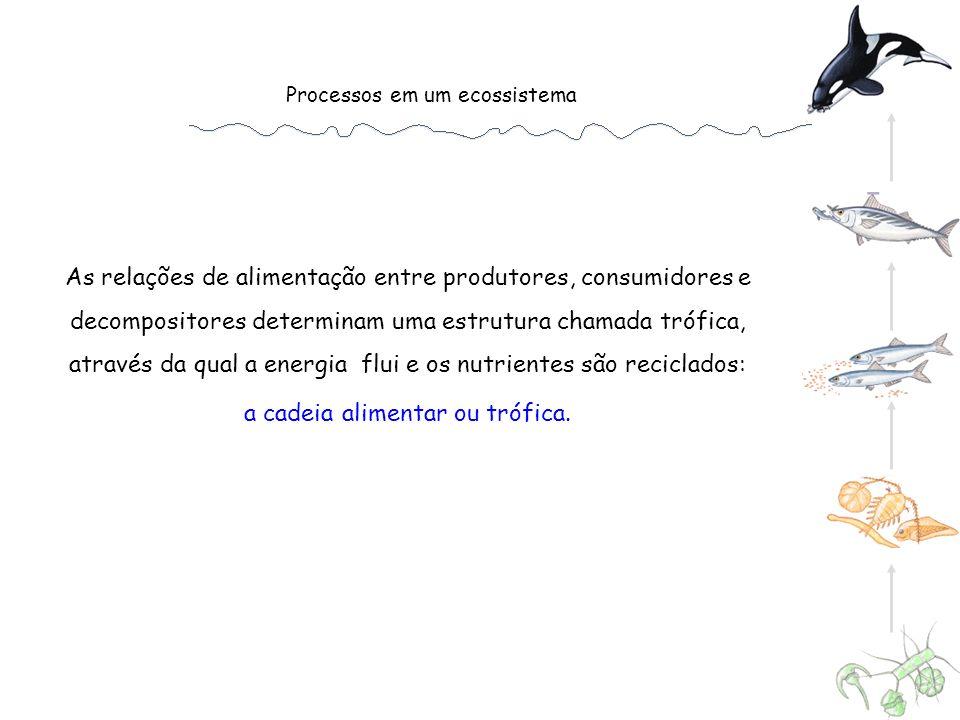 Produção n Assimilação n Detritos Produção n-1 Não consumido 2 da Produção 1 ra Produção Ingestão n Assimilação n Produção n Respiraçã o Eficiência de produção líquida: Ep = Fezes e urina
