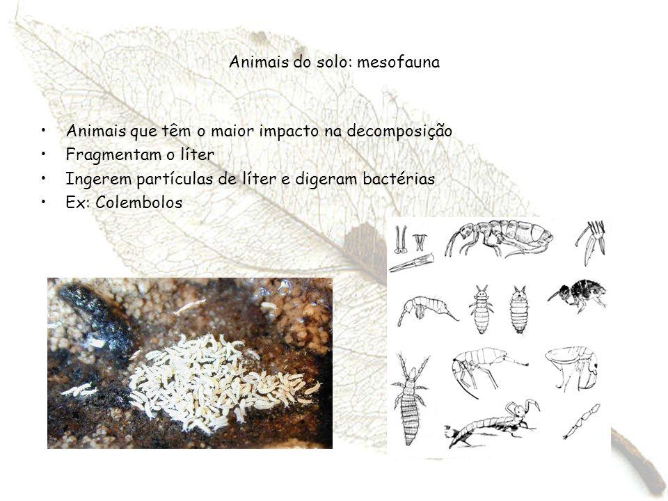 Animais do solo: mesofauna Animais que têm o maior impacto na decomposição Fragmentam o líter Ingerem partículas de líter e digeram bactérias Ex: Cole