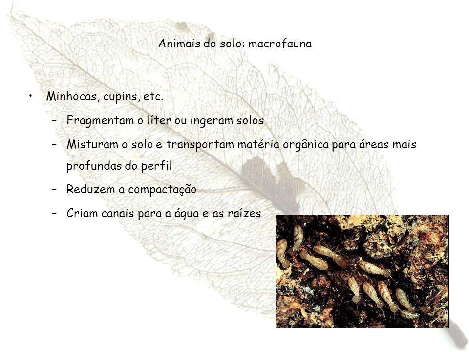 Animais do solo: macrofauna Minhocas, cupins, etc. –Fragmentam o líter ou ingeram solos –Misturam o solo e transportam matéria orgânica para áreas mai