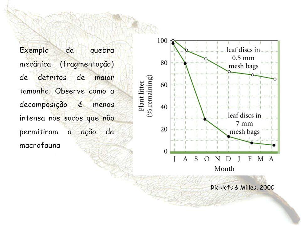 Exemplo da quebra mecânica (fragmentação) de detritos de maior tamanho. Observe como a decomposição é menos intensa nos sacos que não permitiram a açã