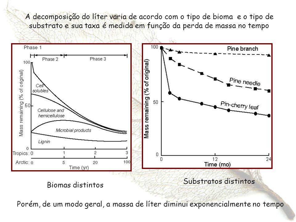 A decomposição do líter varia de acordo com o tipo de bioma e o tipo de substrato e sua taxa é medida em função da perda de massa no tempo Substratos
