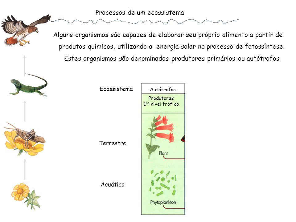 Processos de um ecossistema Alguns organismos são capazes de elaborar seu próprio alimento a partir de produtos químicos, utilizando a energia solar n