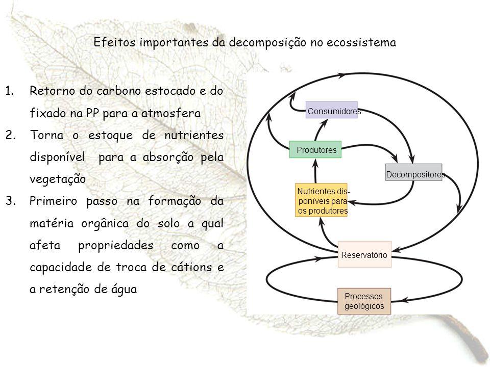 Efeitos importantes da decomposição no ecossistema 1.Retorno do carbono estocado e do fixado na PP para a atmosfera 2.Torna o estoque de nutrientes di