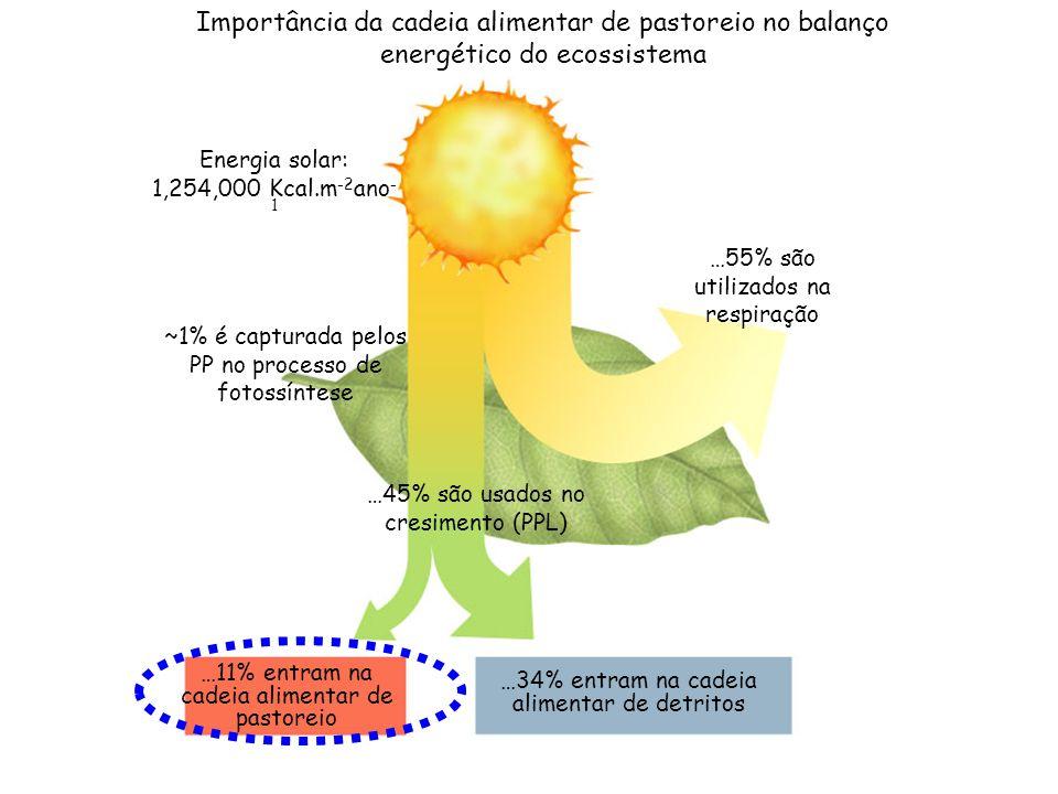 Energia solar: 1,254,000 Kcal.m -2 ano - 1 ~1% é capturada pelos PP no processo de fotossíntese …45% são usados no cresimento (PPL) …11% entram na cad