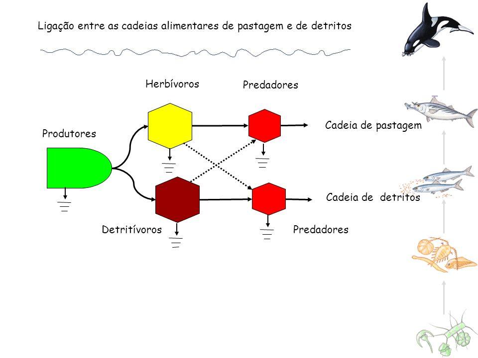 Cadeia de pastagem Cadeia de detritos Herbívoros Predadores Detritívoros Produtores Ligação entre as cadeias alimentares de pastagem e de detritos