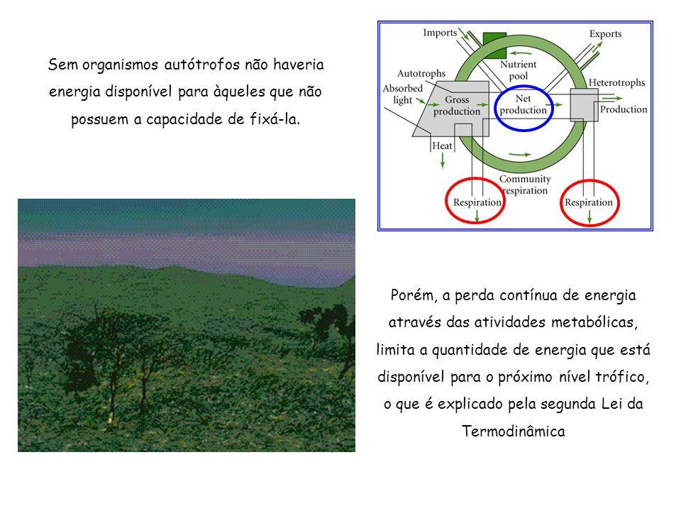 Processos de um ecossistema Certos organismos consomem produtos elaborados pelos produtores, os consumidores ou heterótrofos Heterótrofos Autótrofos Produtores 1 ro nível trófico Consumidores primários 2 do nível trófico Consumidores secundários 3 ro nível trófico Consumidores terciários 4 to nível trófico Ecossistema Terrestre Aquático