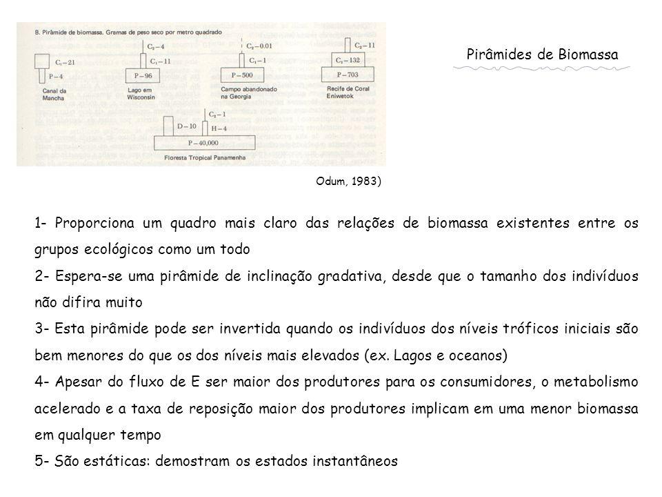 Pirâmides de Biomassa Odum, 1983) 1- Proporciona um quadro mais claro das relações de biomassa existentes entre os grupos ecológicos como um todo 2- E