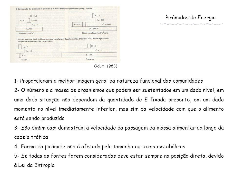 Odum, 1983) Pirâmides de Energia 1- Proporcionam a melhor imagem geral da natureza funcional das comunidades 2- O número e a massa de organismos que p