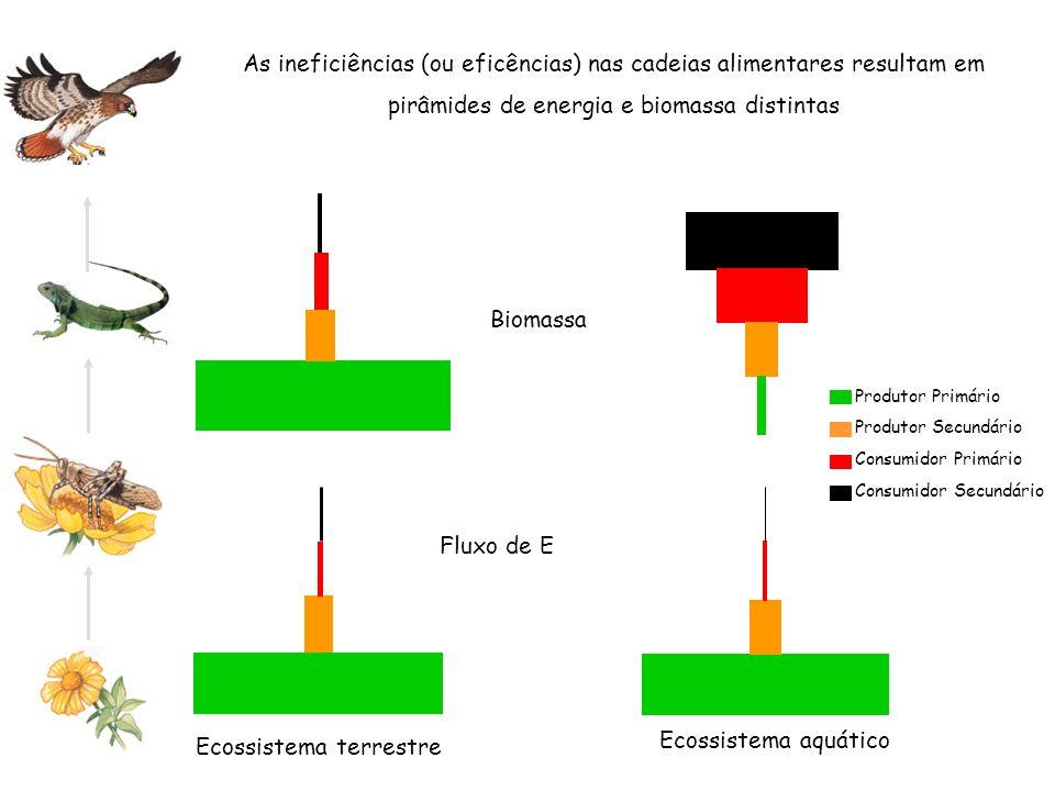 As ineficiências (ou eficências) nas cadeias alimentares resultam em pirâmides de energia e biomassa distintas Ecossistema terrestre Ecossistema aquát