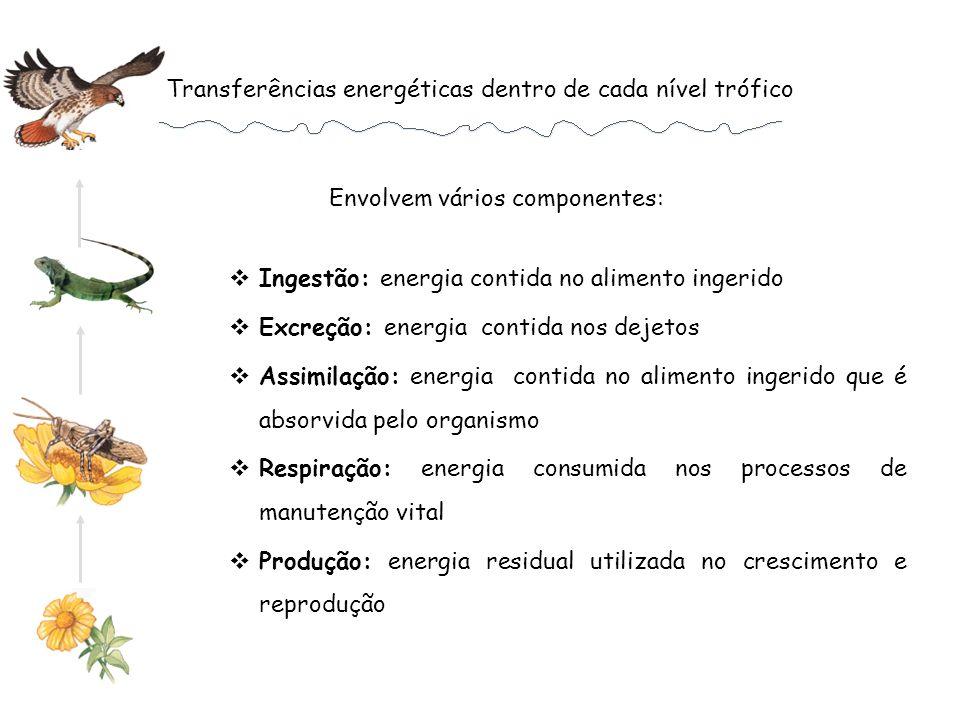 Transferências energéticas dentro de cada nível trófico Ingestão: energia contida no alimento ingerido Excreção: energia contida nos dejetos Assimilaç