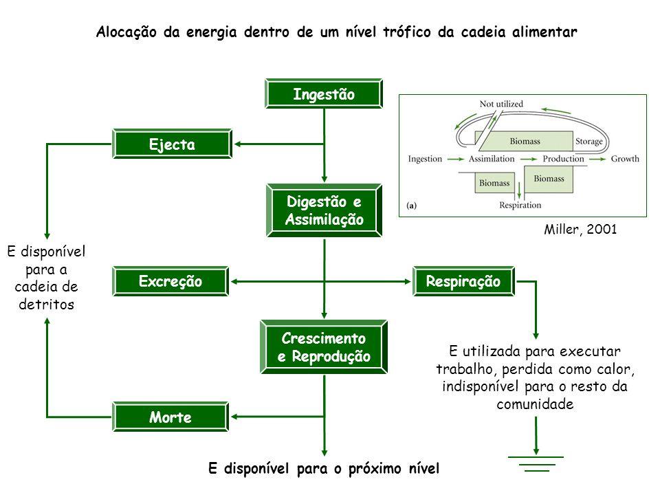 Alocação da energia dentro de um nível trófico da cadeia alimentar Ingestão Digestão e Assimilação Crescimento e Reprodução Ejecta Excreção Morte Resp