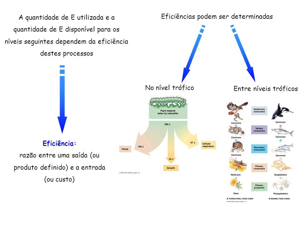 Eficiência: razão entre uma saída (ou produto definido) e a entrada (ou custo) Eficiências podem ser determinadas Entre níveis tróficos No nível trófi