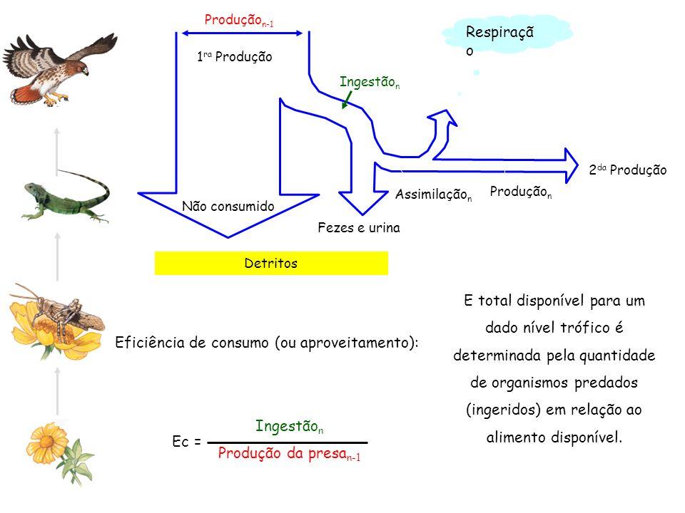 Eficiência de consumo (ou aproveitamento): Detritos Produção n-1 Não consumido 2 da Produção 1 ra Produção Ingestão n Assimilação n Produção n Respira