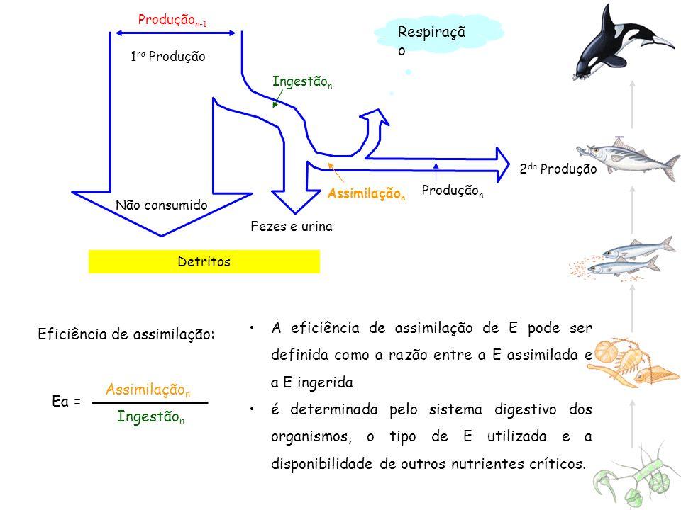Assimilação n Ingestão n Detritos Produção n-1 Não consumido Fezes e urina 2 da Produção 1 ra Produção Ingestão n Assimilação n Produção n Respiraçã o