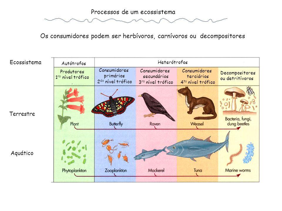As ineficiências (ou eficências) nas cadeias alimentares resultam em pirâmides de energia e biomassa distintas Ecossistema terrestre Ecossistema aquático Biomassa Fluxo de E Produtor Primário Produtor Secundário Consumidor Primário Consumidor Secundário
