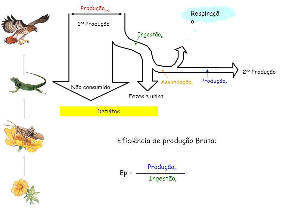 Detritos Produção n-1 Não consumido 2 da Produção 1 ra Produção Ingestão n Assimilação n Produção n Respiraçã o Produção n Ingestão n Eficiência de pr