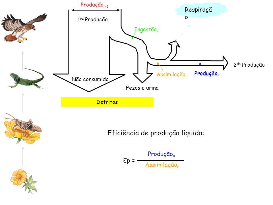 Produção n Assimilação n Detritos Produção n-1 Não consumido 2 da Produção 1 ra Produção Ingestão n Assimilação n Produção n Respiraçã o Eficiência de