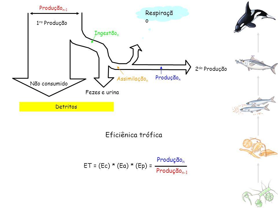 Produção n Produção n-1 Detritos Produção n-1 Não consumido 2 da Produção 1 ra Produção Ingestão n Assimilação n Produção n Respiraçã o Eficiênica tró