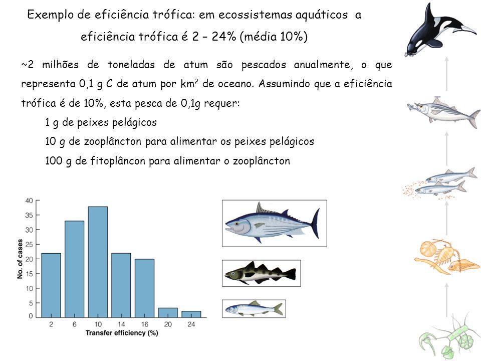 Exemplo de eficiência trófica: em ecossistemas aquáticos a eficiência trófica é 2 – 24% (média 10%) ~2 milhões de toneladas de atum são pescados anual