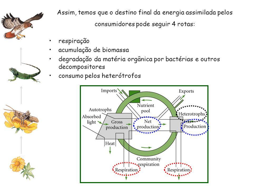 Assim, temos que o destino final da energia assimilada pelos consumidores pode seguir 4 rotas: respiração acumulação de biomassa degradação da matéria