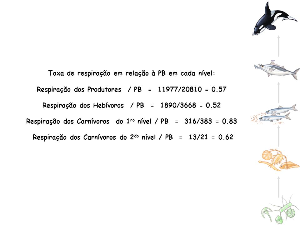 Taxa de respiração em relação à PB em cada nível: Respiração dos Produtores / PB = 11977/20810 = 0.57 Respiração dos Hebívoros / PB = 1890/3668 = 0.52