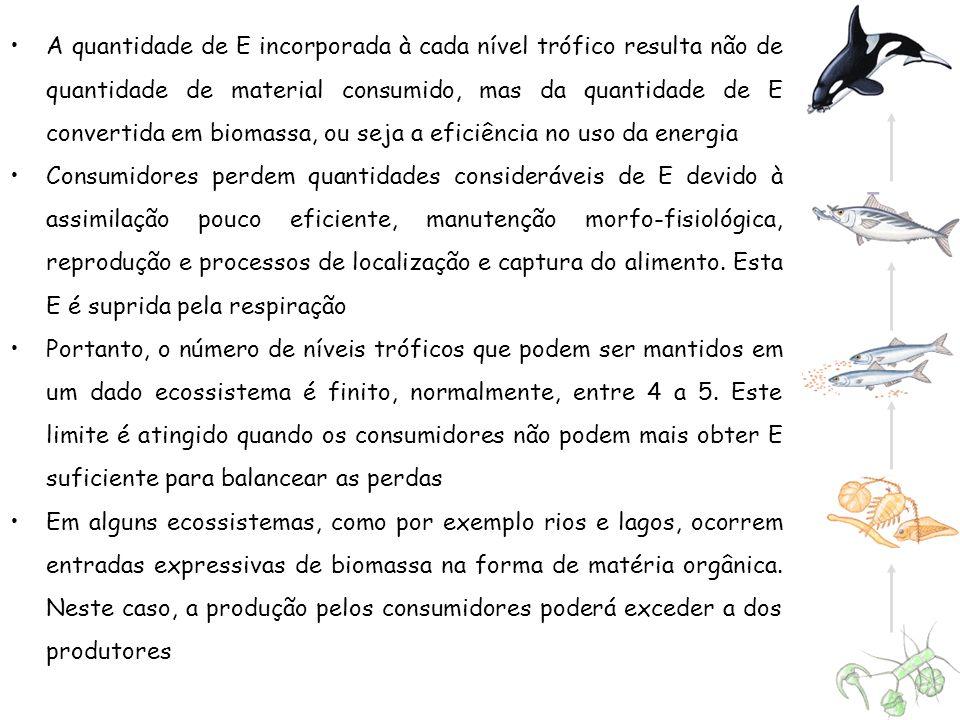 A quantidade de E incorporada à cada nível trófico resulta não de quantidade de material consumido, mas da quantidade de E convertida em biomassa, ou