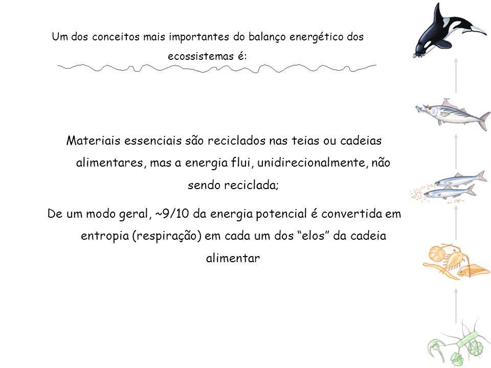 Um dos conceitos mais importantes do balanço energético dos ecossistemas é: Materiais essenciais são reciclados nas teias ou cadeias alimentares, mas