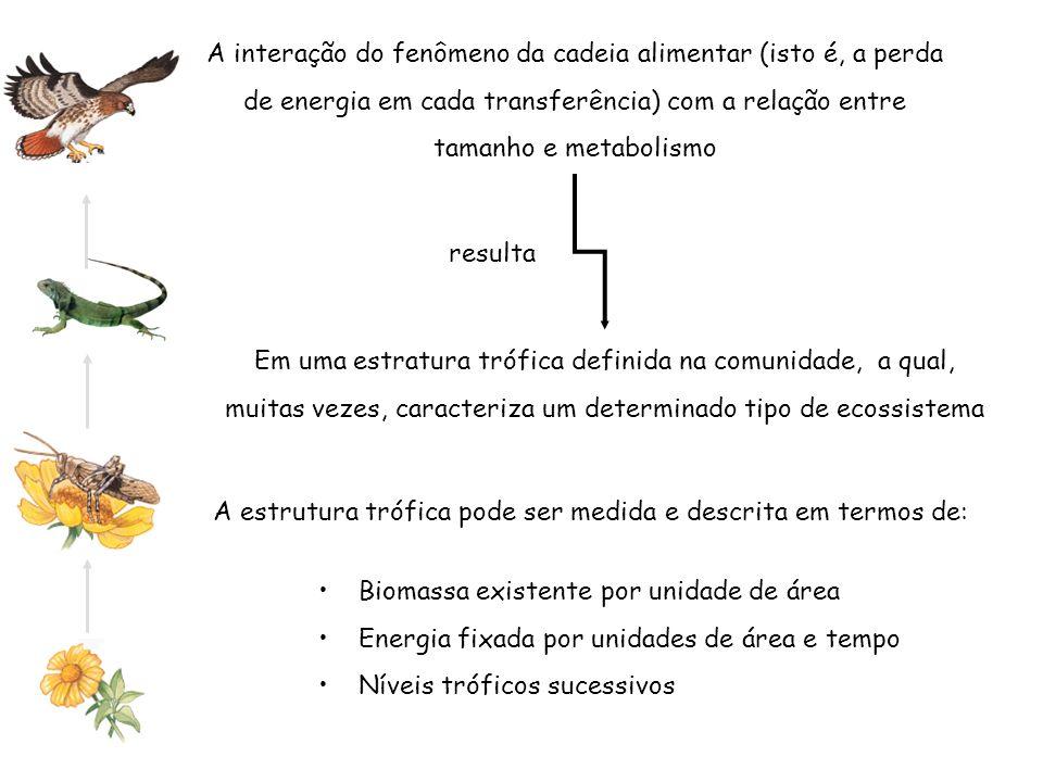 A interação do fenômeno da cadeia alimentar (isto é, a perda de energia em cada transferência) com a relação entre tamanho e metabolismo Em uma estrat