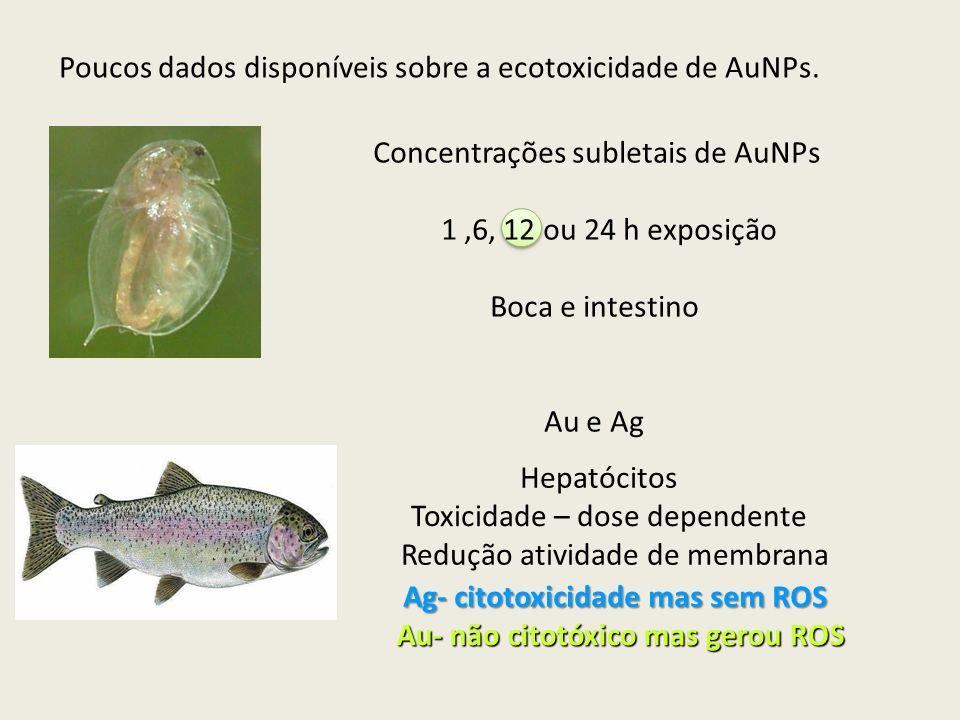 Concentrações subletais de AuNPs 1,6, 12 ou 24 h exposição Boca e intestino Au e Ag Poucos dados disponíveis sobre a ecotoxicidade de AuNPs. Hepatócit